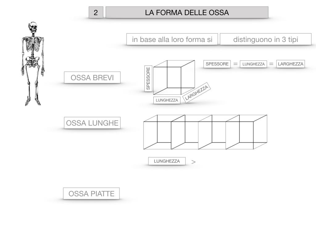 5. SCIENZE_COMPOSIZIONE E FORMA DELLE OSSA_SIMULAZIONE.050