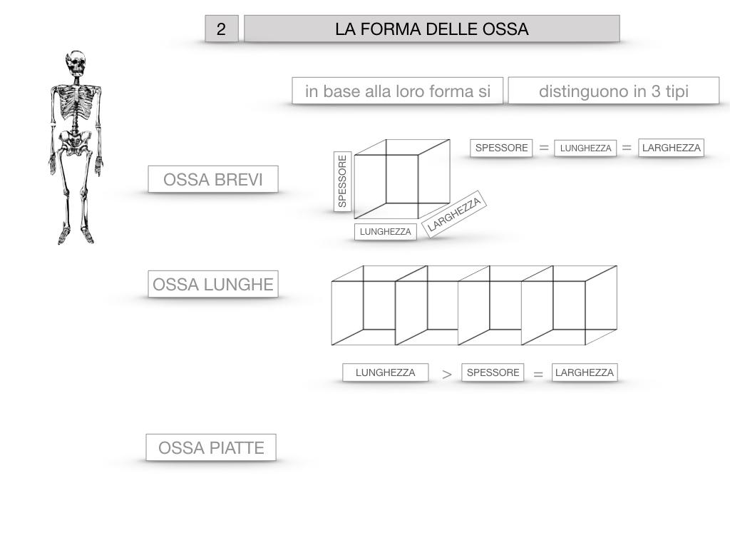 5. SCIENZE_COMPOSIZIONE E FORMA DELLE OSSA_SIMULAZIONE.051