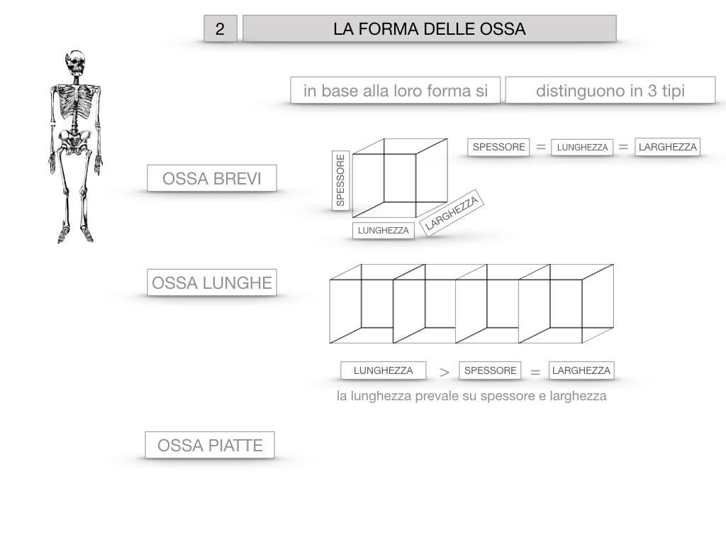 5. SCIENZE_COMPOSIZIONE E FORMA DELLE OSSA_SIMULAZIONE.052