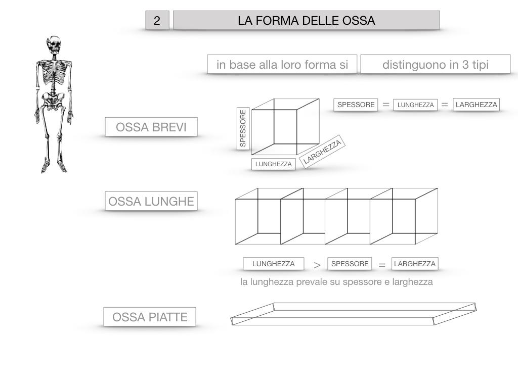 5. SCIENZE_COMPOSIZIONE E FORMA DELLE OSSA_SIMULAZIONE.053