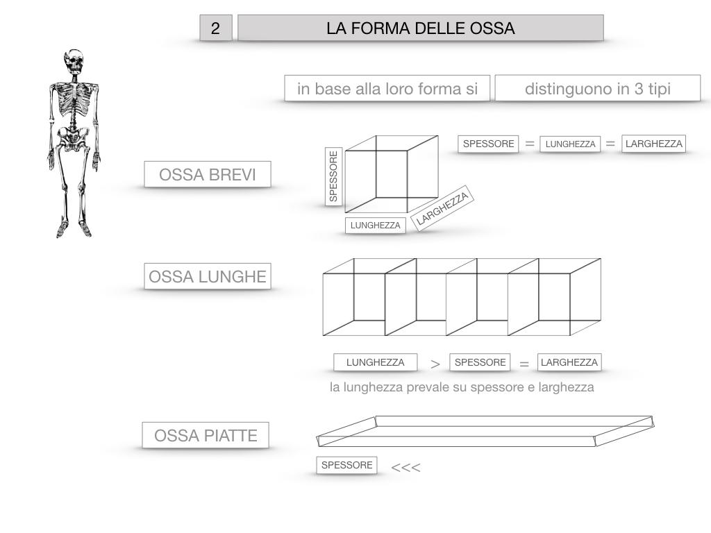5. SCIENZE_COMPOSIZIONE E FORMA DELLE OSSA_SIMULAZIONE.054