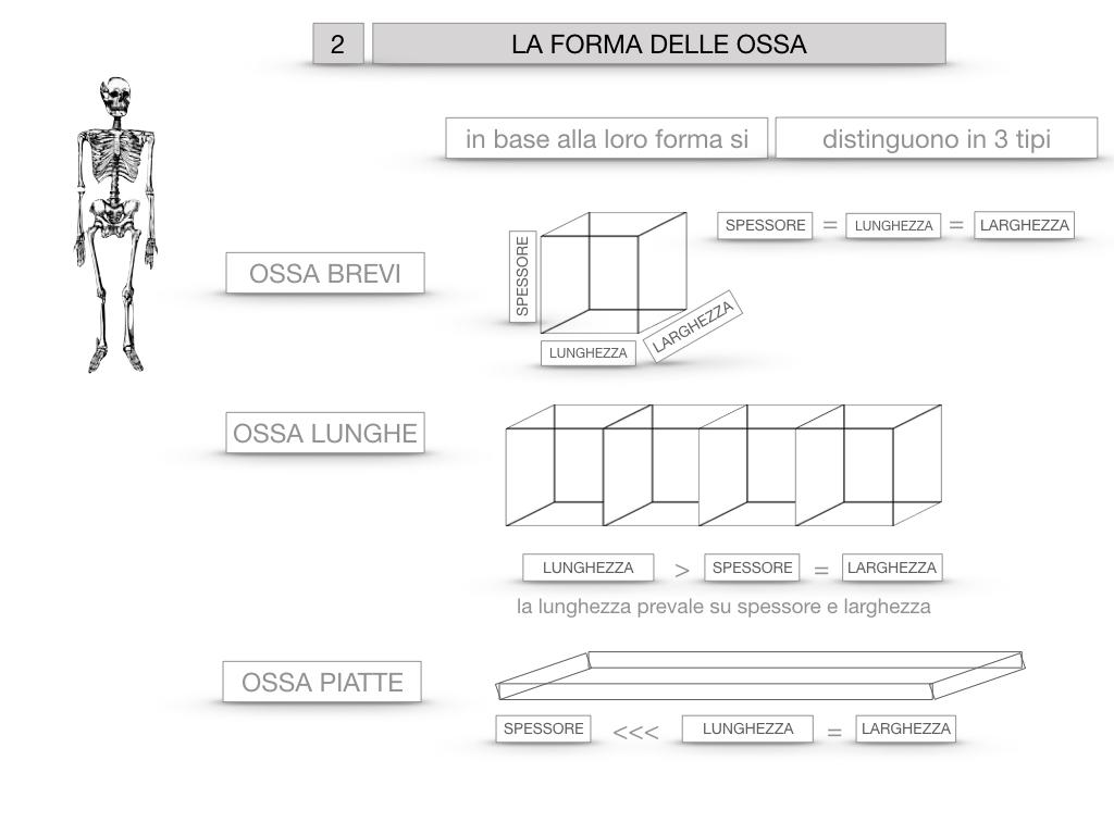 5. SCIENZE_COMPOSIZIONE E FORMA DELLE OSSA_SIMULAZIONE.055