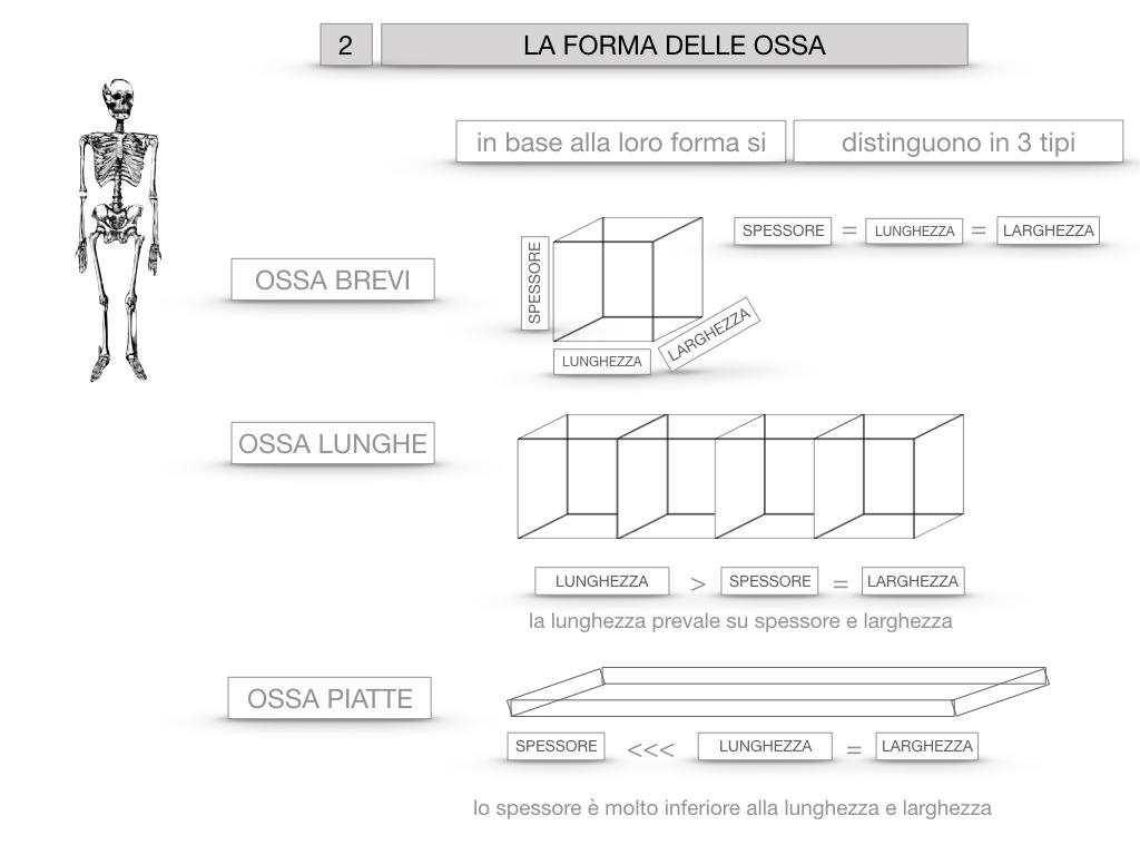 5. SCIENZE_COMPOSIZIONE E FORMA DELLE OSSA_SIMULAZIONE.056