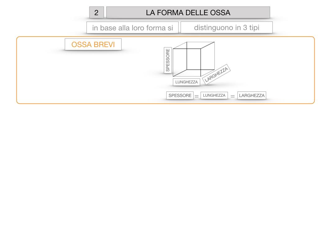 5. SCIENZE_COMPOSIZIONE E FORMA DELLE OSSA_SIMULAZIONE.058