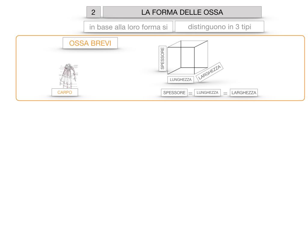 5. SCIENZE_COMPOSIZIONE E FORMA DELLE OSSA_SIMULAZIONE.059