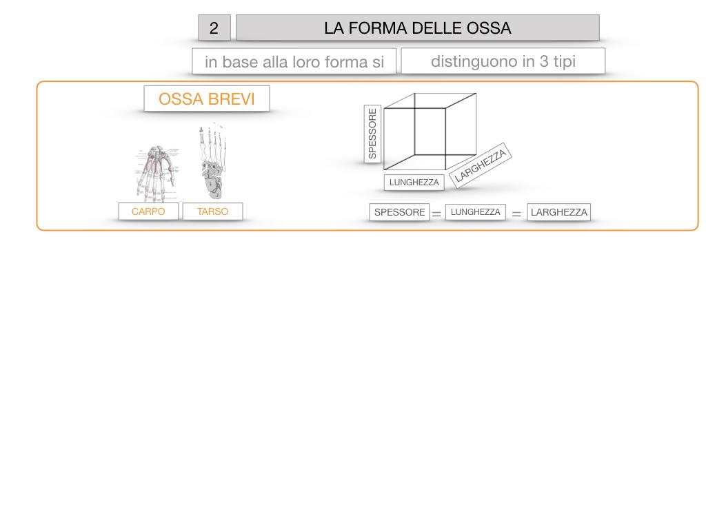 5. SCIENZE_COMPOSIZIONE E FORMA DELLE OSSA_SIMULAZIONE.060