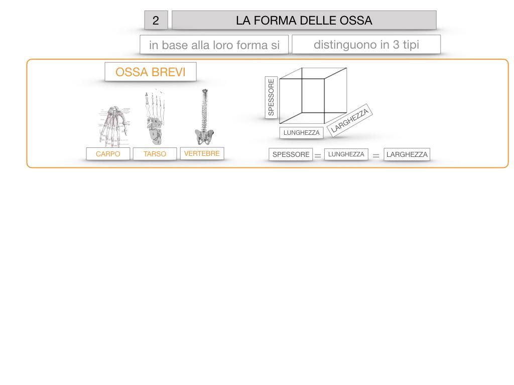 5. SCIENZE_COMPOSIZIONE E FORMA DELLE OSSA_SIMULAZIONE.061