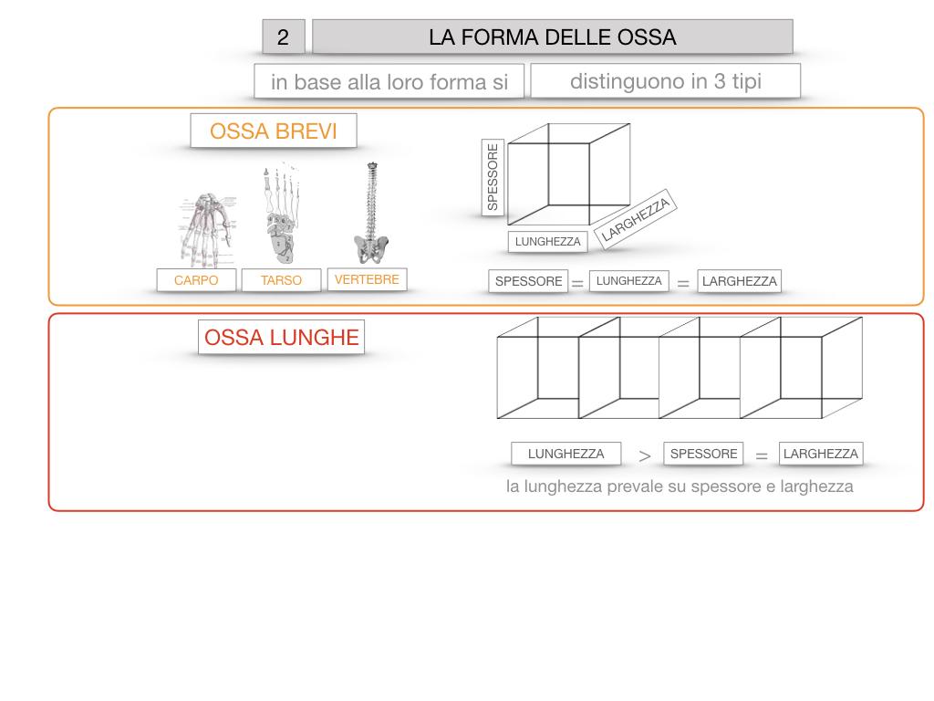 5. SCIENZE_COMPOSIZIONE E FORMA DELLE OSSA_SIMULAZIONE.062