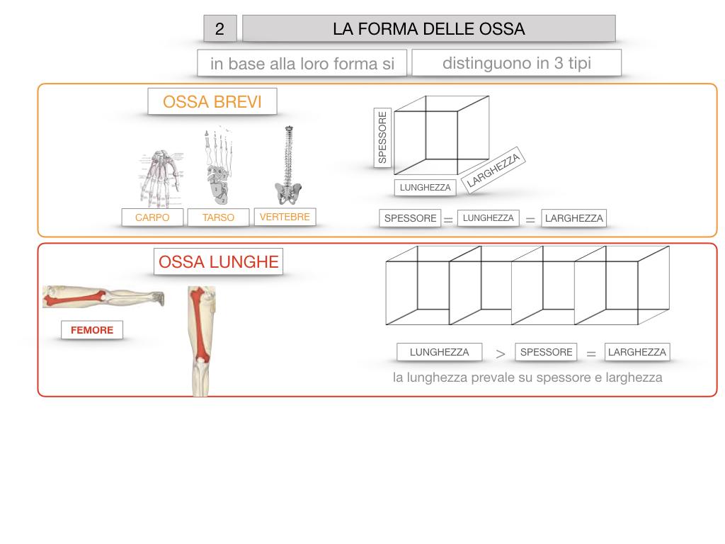 5. SCIENZE_COMPOSIZIONE E FORMA DELLE OSSA_SIMULAZIONE.063