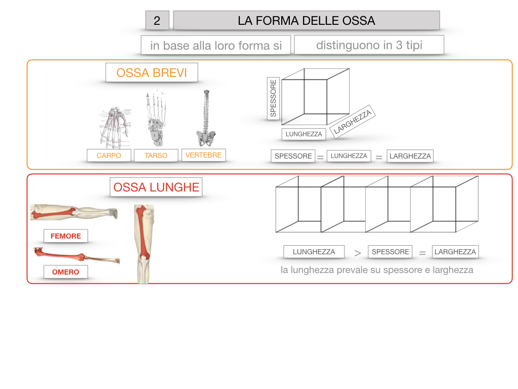 5. SCIENZE_COMPOSIZIONE E FORMA DELLE OSSA_SIMULAZIONE.064
