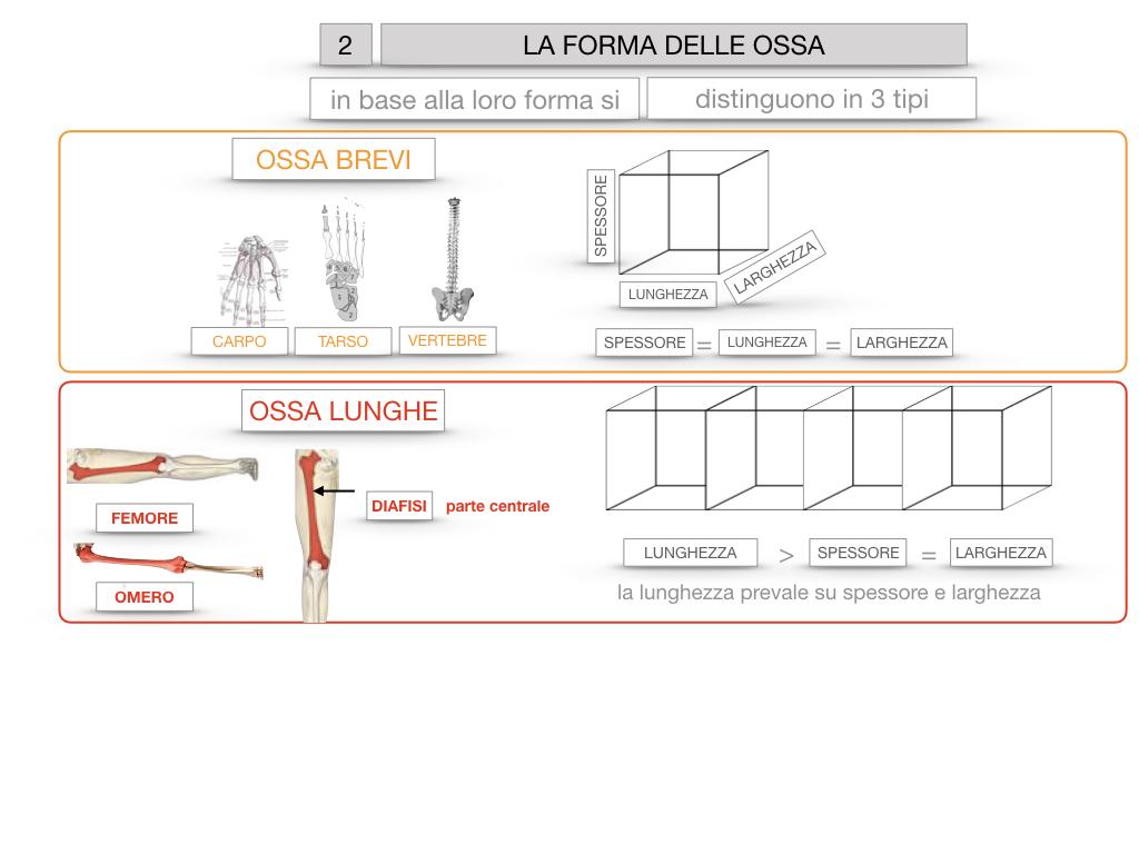 5. SCIENZE_COMPOSIZIONE E FORMA DELLE OSSA_SIMULAZIONE.065