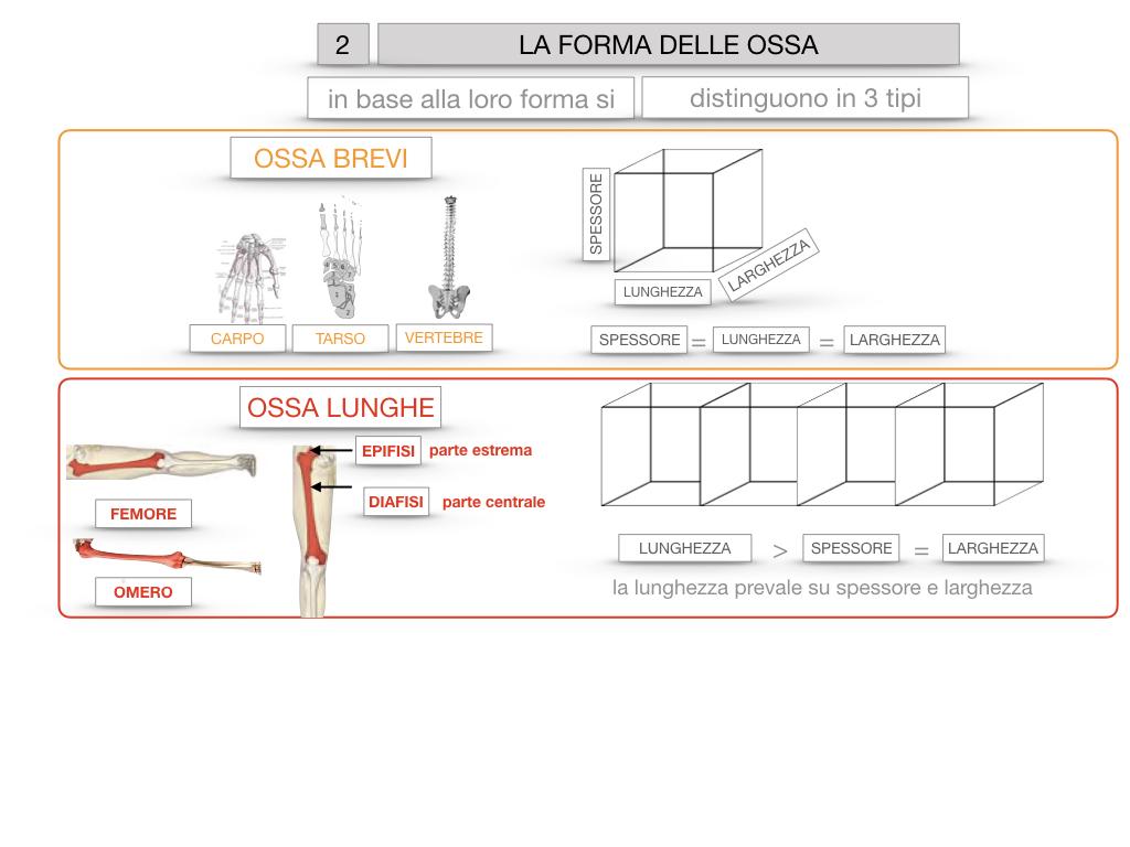 5. SCIENZE_COMPOSIZIONE E FORMA DELLE OSSA_SIMULAZIONE.066