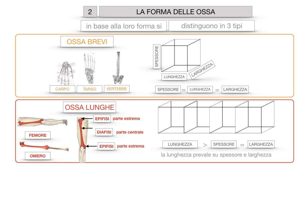 5. SCIENZE_COMPOSIZIONE E FORMA DELLE OSSA_SIMULAZIONE.067