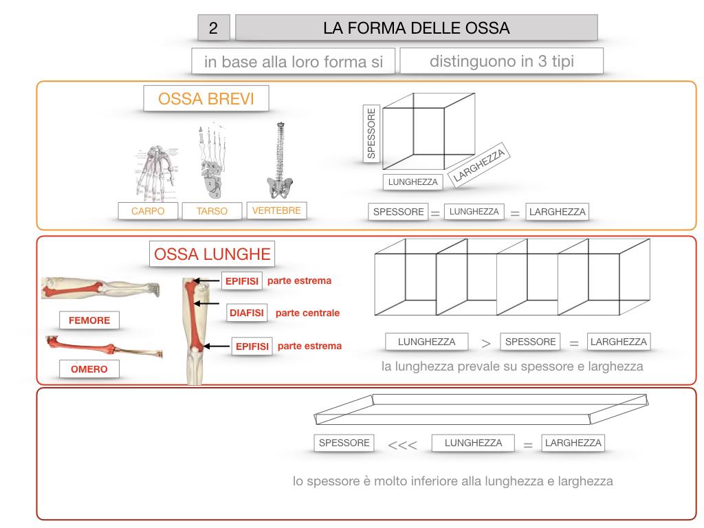 5. SCIENZE_COMPOSIZIONE E FORMA DELLE OSSA_SIMULAZIONE.068