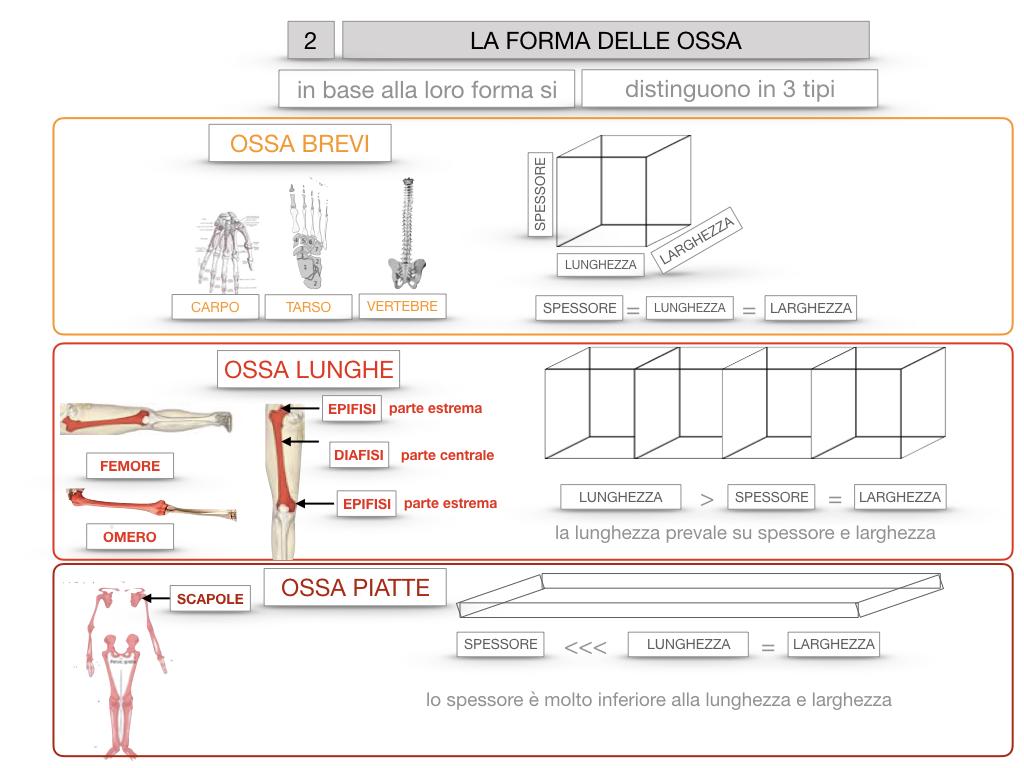 5. SCIENZE_COMPOSIZIONE E FORMA DELLE OSSA_SIMULAZIONE.069