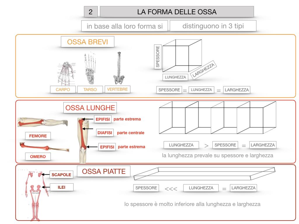 5. SCIENZE_COMPOSIZIONE E FORMA DELLE OSSA_SIMULAZIONE.070