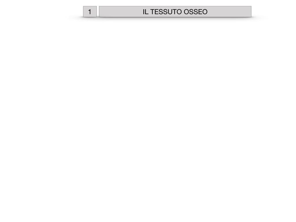 6. TESSUTO OSSEO_ CALCIFICAZIONE_MIDOLLO OSSEO_SIMULAZIONE.001