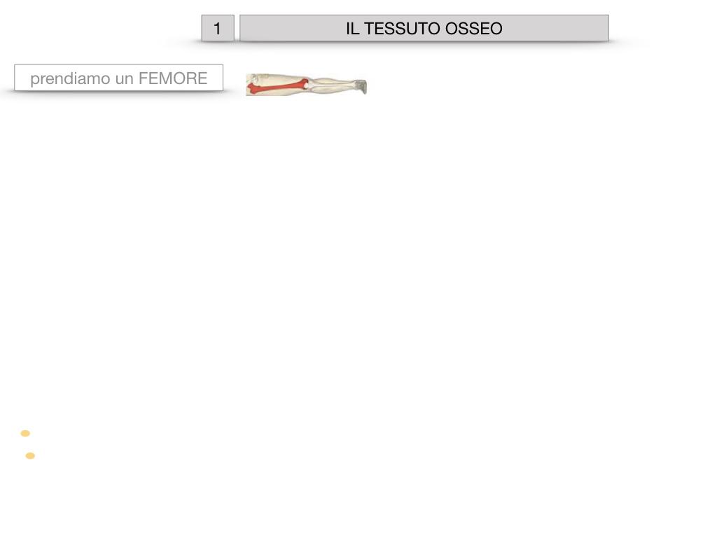 6. TESSUTO OSSEO_ CALCIFICAZIONE_MIDOLLO OSSEO_SIMULAZIONE.002