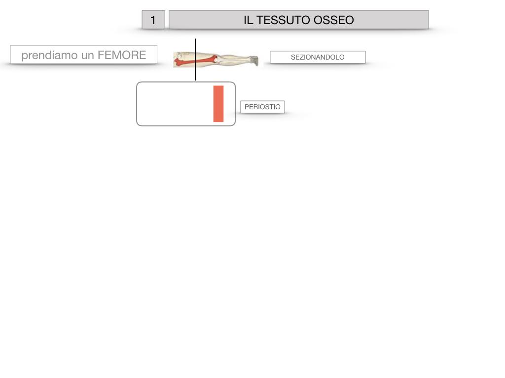 6. TESSUTO OSSEO_ CALCIFICAZIONE_MIDOLLO OSSEO_SIMULAZIONE.004