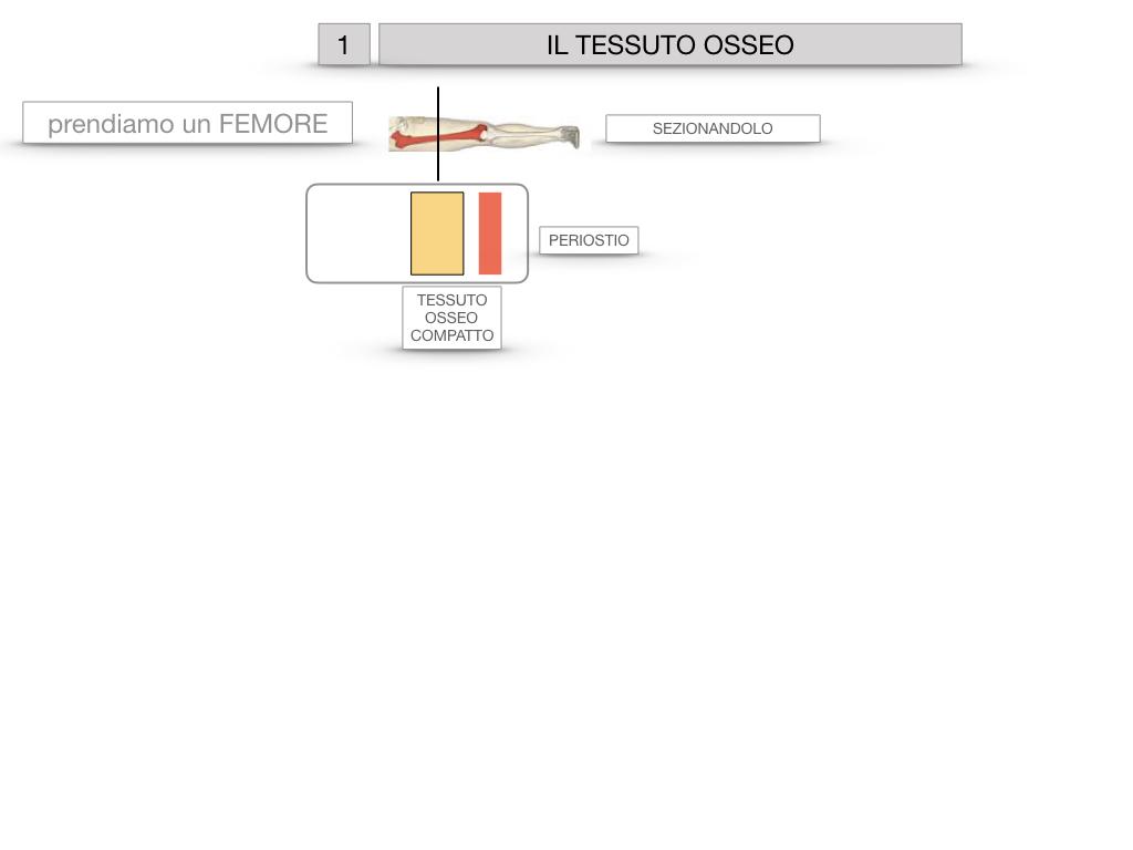 6. TESSUTO OSSEO_ CALCIFICAZIONE_MIDOLLO OSSEO_SIMULAZIONE.005