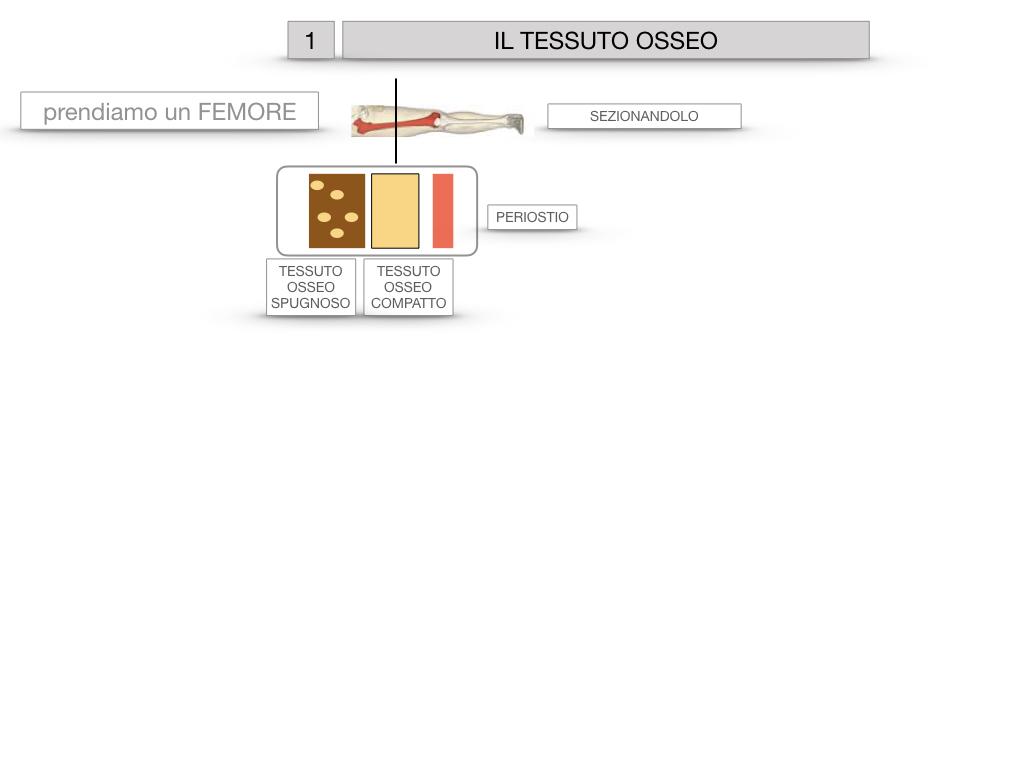 6. TESSUTO OSSEO_ CALCIFICAZIONE_MIDOLLO OSSEO_SIMULAZIONE.006