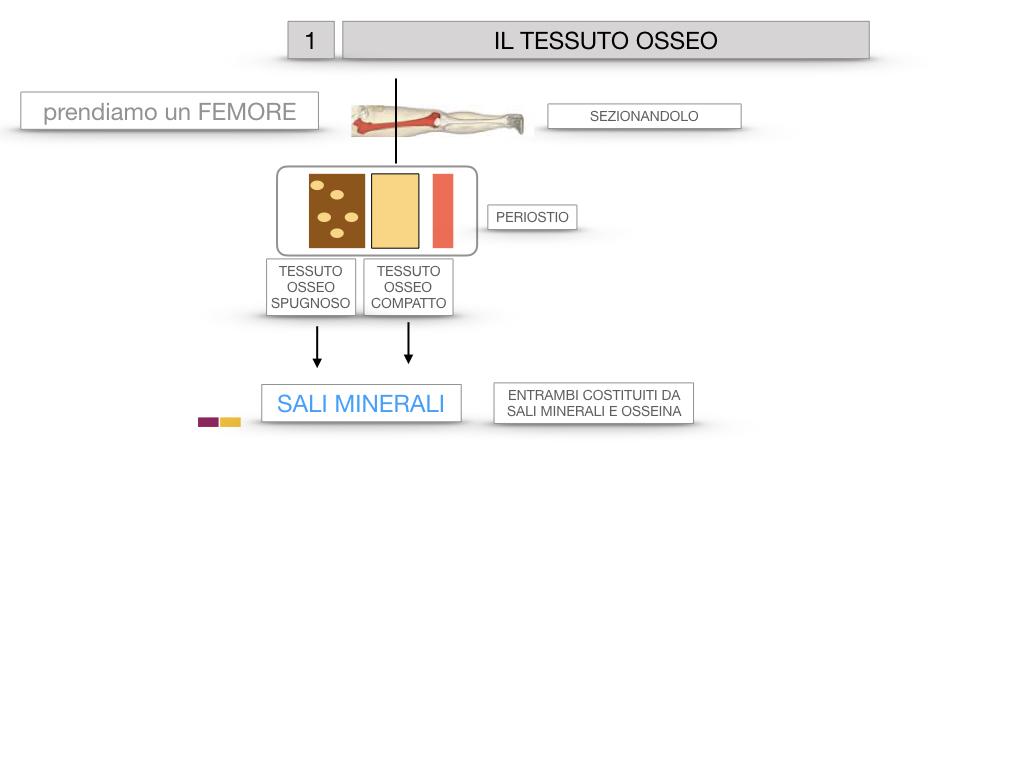 6. TESSUTO OSSEO_ CALCIFICAZIONE_MIDOLLO OSSEO_SIMULAZIONE.008