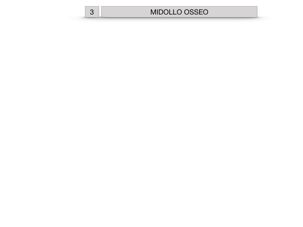 6. TESSUTO OSSEO_ CALCIFICAZIONE_MIDOLLO OSSEO_SIMULAZIONE.046
