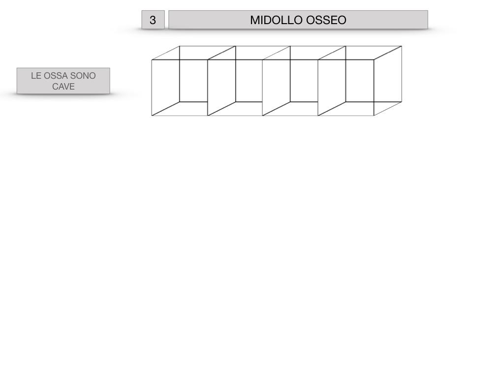 6. TESSUTO OSSEO_ CALCIFICAZIONE_MIDOLLO OSSEO_SIMULAZIONE.047