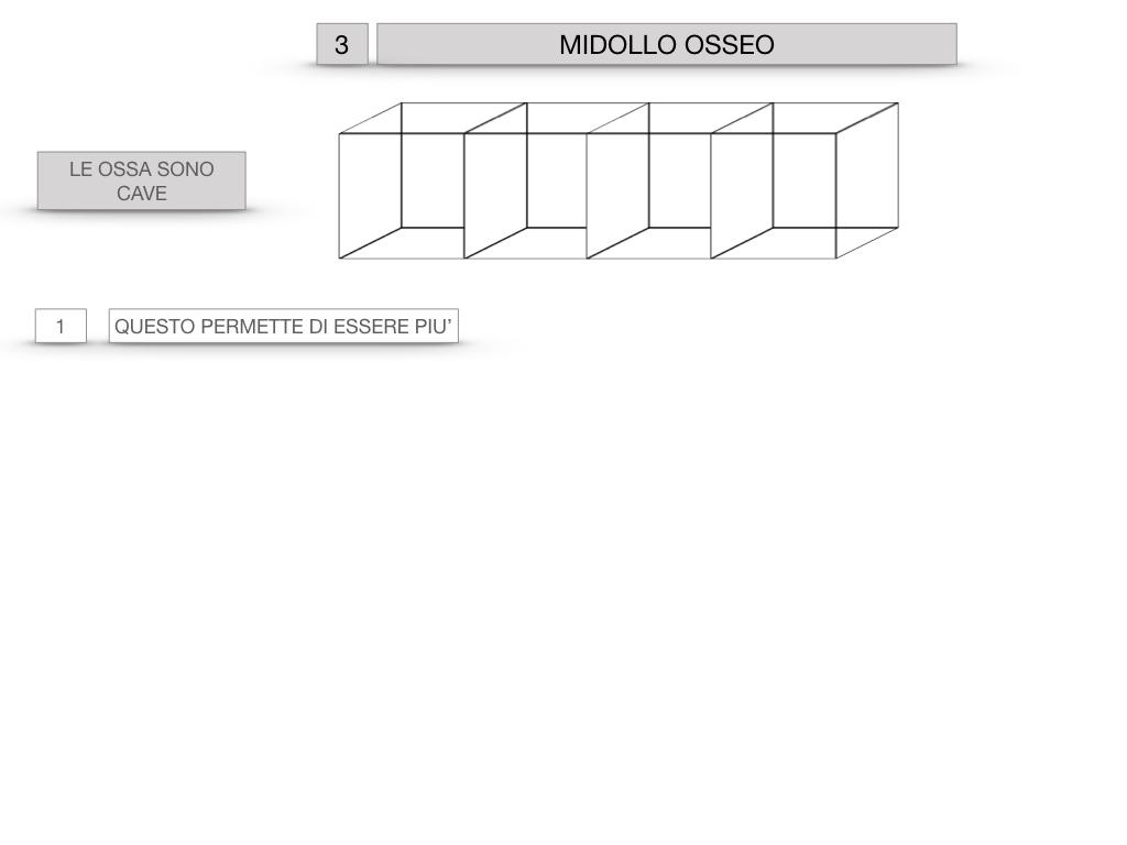 6. TESSUTO OSSEO_ CALCIFICAZIONE_MIDOLLO OSSEO_SIMULAZIONE.048