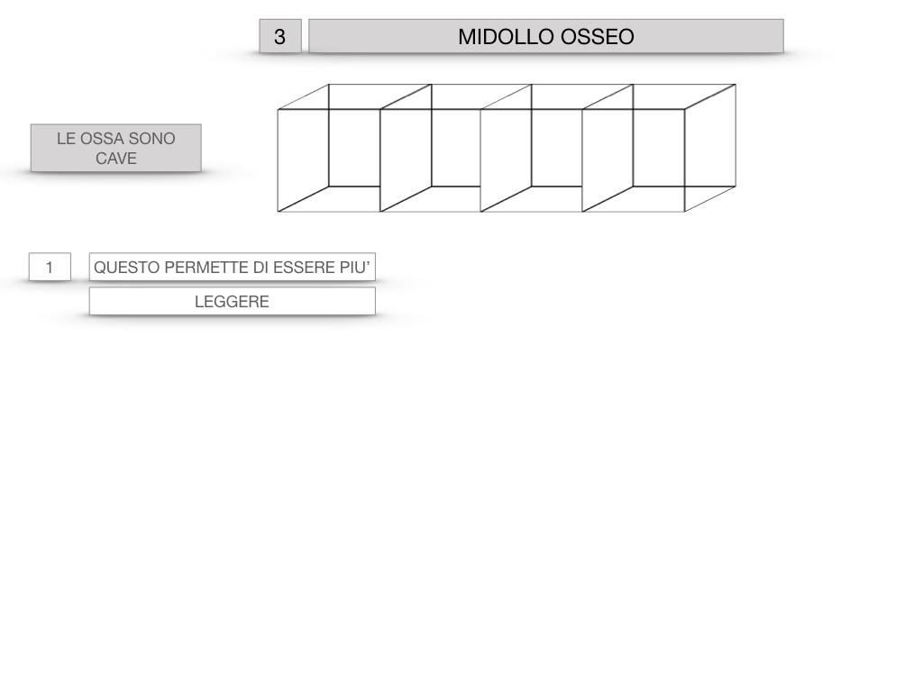 6. TESSUTO OSSEO_ CALCIFICAZIONE_MIDOLLO OSSEO_SIMULAZIONE.049