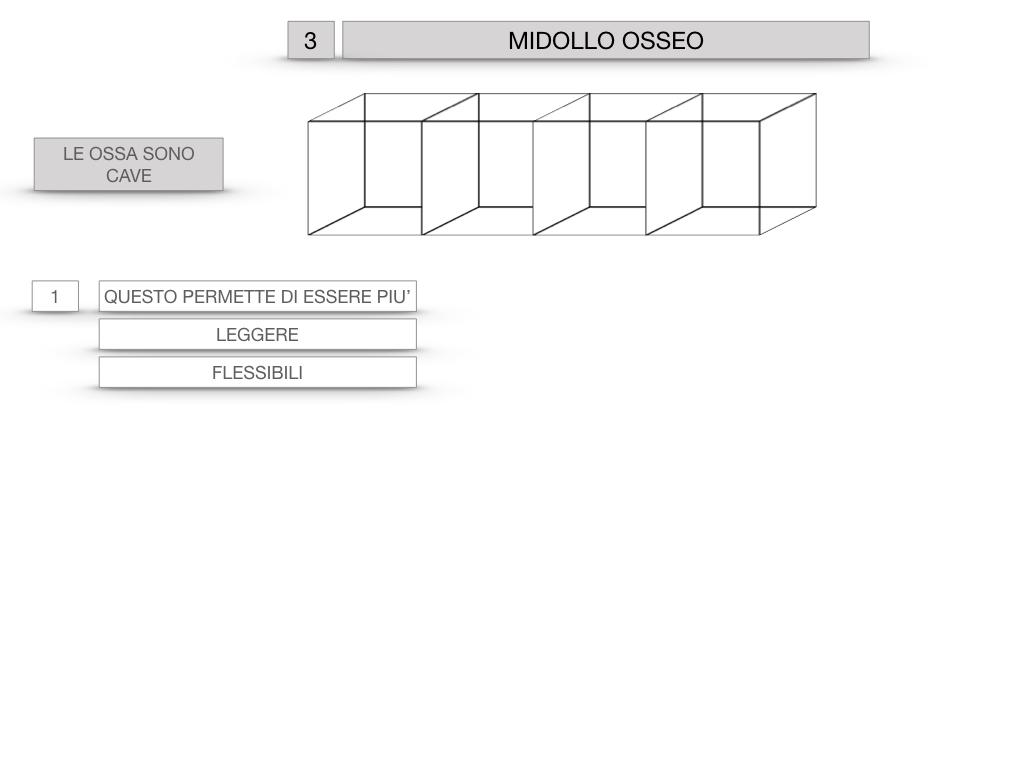 6. TESSUTO OSSEO_ CALCIFICAZIONE_MIDOLLO OSSEO_SIMULAZIONE.050