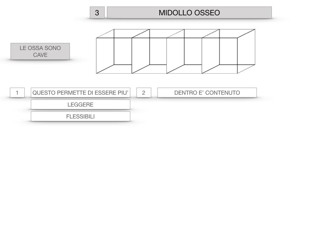 6. TESSUTO OSSEO_ CALCIFICAZIONE_MIDOLLO OSSEO_SIMULAZIONE.051