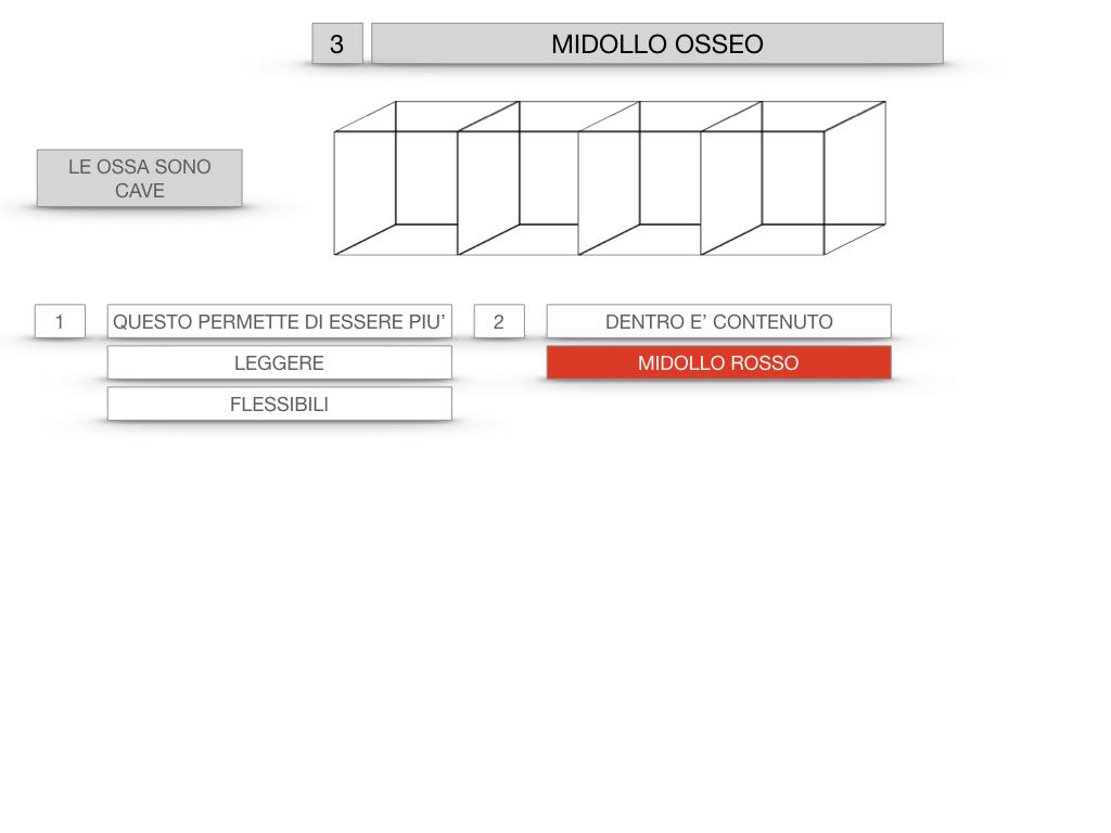6. TESSUTO OSSEO_ CALCIFICAZIONE_MIDOLLO OSSEO_SIMULAZIONE.052