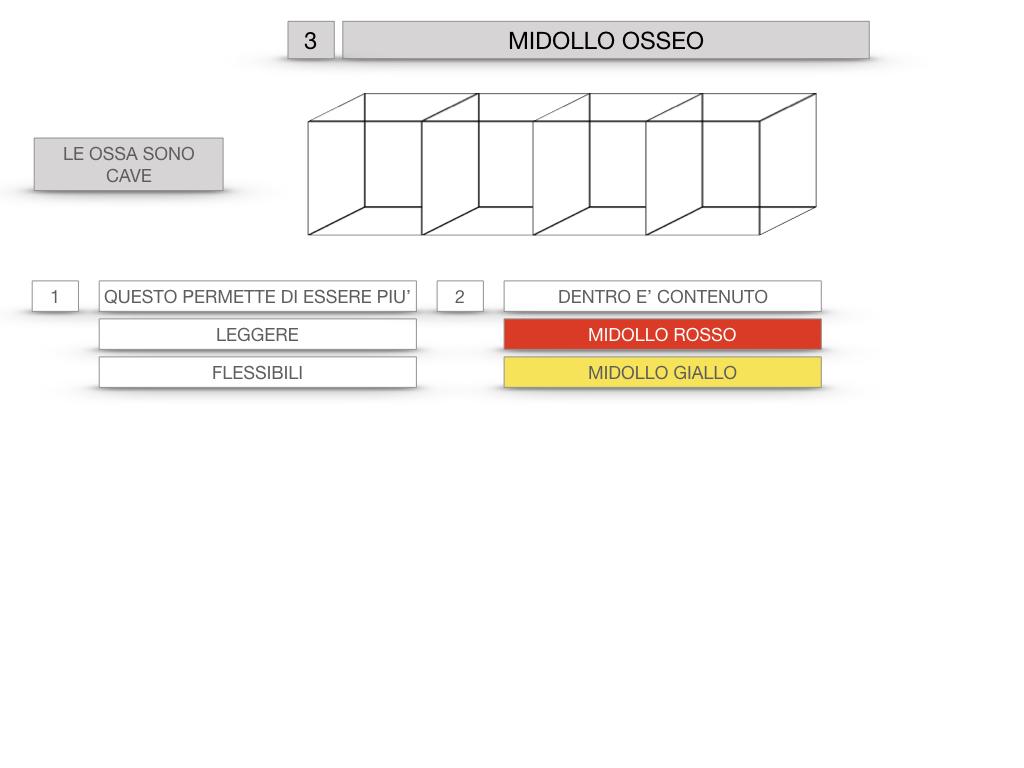 6. TESSUTO OSSEO_ CALCIFICAZIONE_MIDOLLO OSSEO_SIMULAZIONE.053