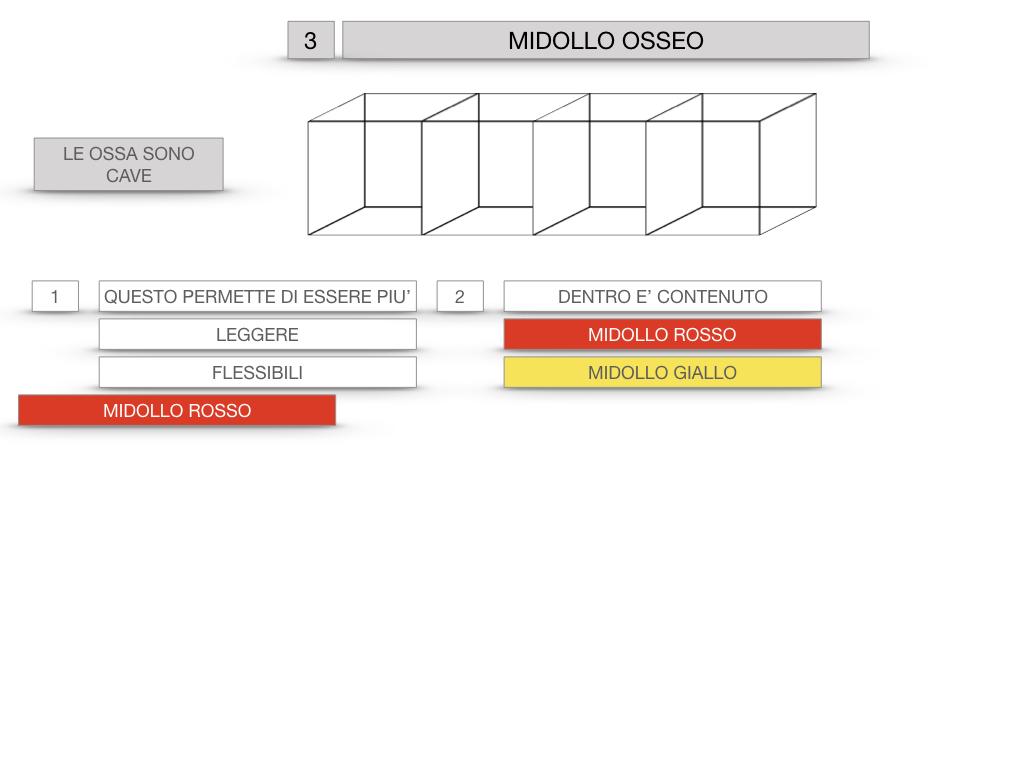 6. TESSUTO OSSEO_ CALCIFICAZIONE_MIDOLLO OSSEO_SIMULAZIONE.054