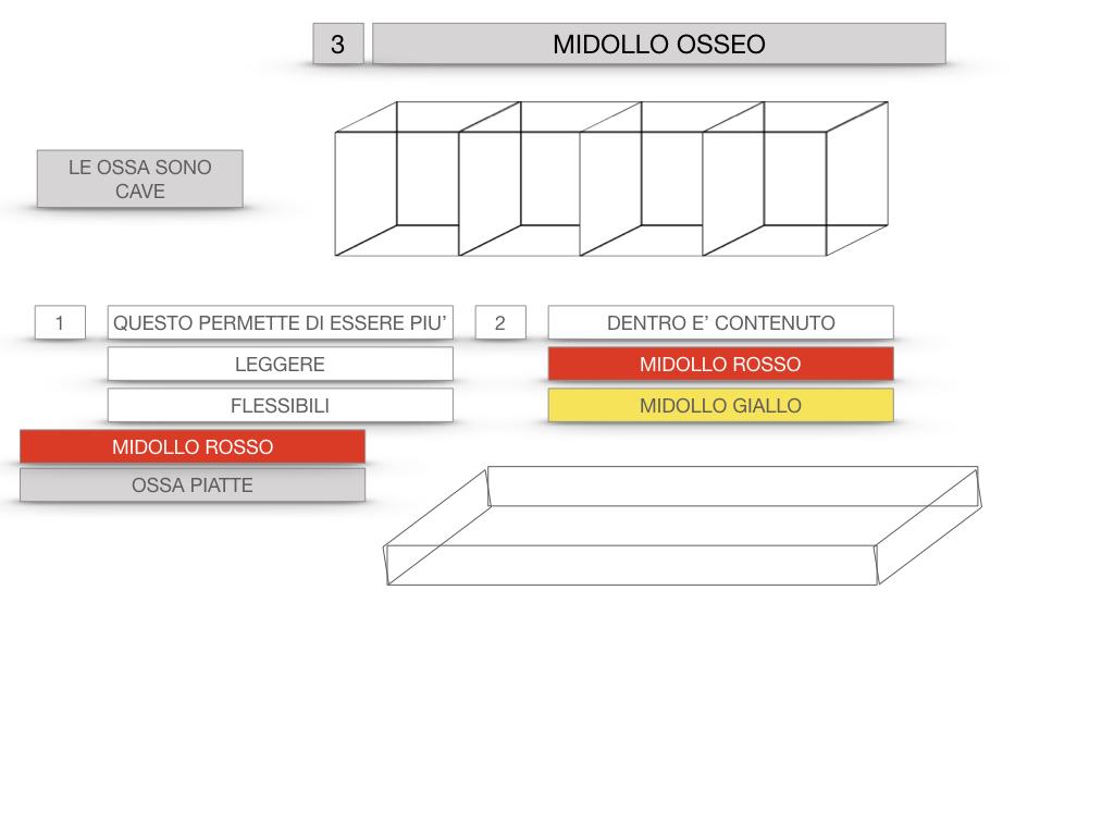 6. TESSUTO OSSEO_ CALCIFICAZIONE_MIDOLLO OSSEO_SIMULAZIONE.055