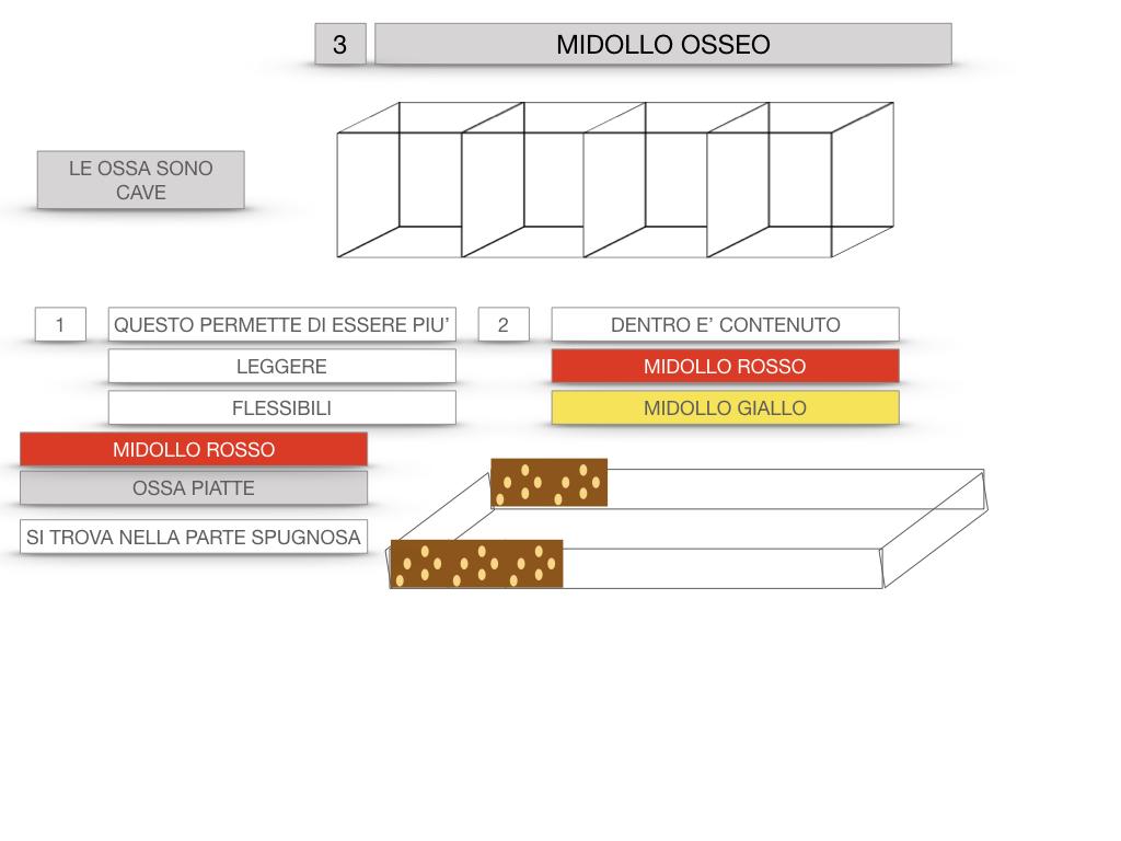 6. TESSUTO OSSEO_ CALCIFICAZIONE_MIDOLLO OSSEO_SIMULAZIONE.056