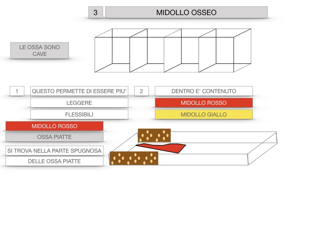 6. TESSUTO OSSEO_ CALCIFICAZIONE_MIDOLLO OSSEO_SIMULAZIONE.057
