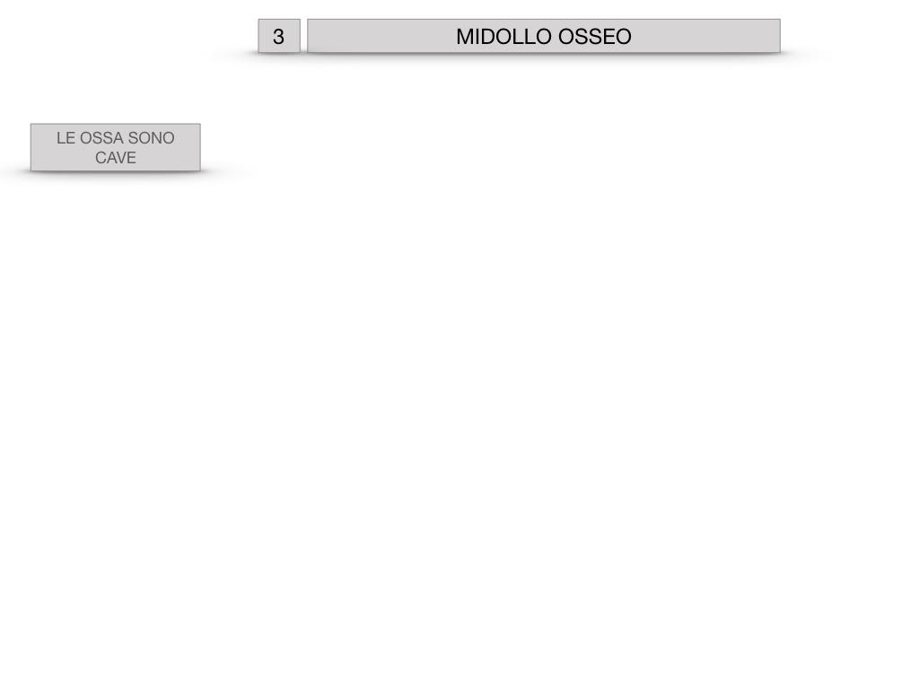 6. TESSUTO OSSEO_ CALCIFICAZIONE_MIDOLLO OSSEO_SIMULAZIONE.066