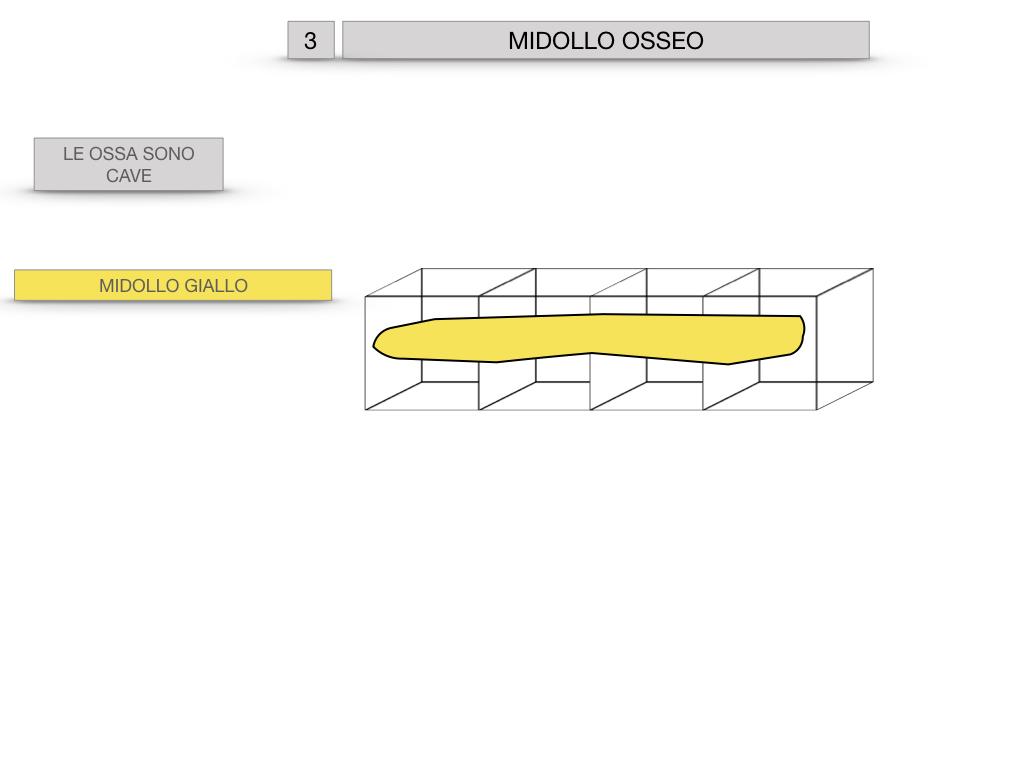 6. TESSUTO OSSEO_ CALCIFICAZIONE_MIDOLLO OSSEO_SIMULAZIONE.067