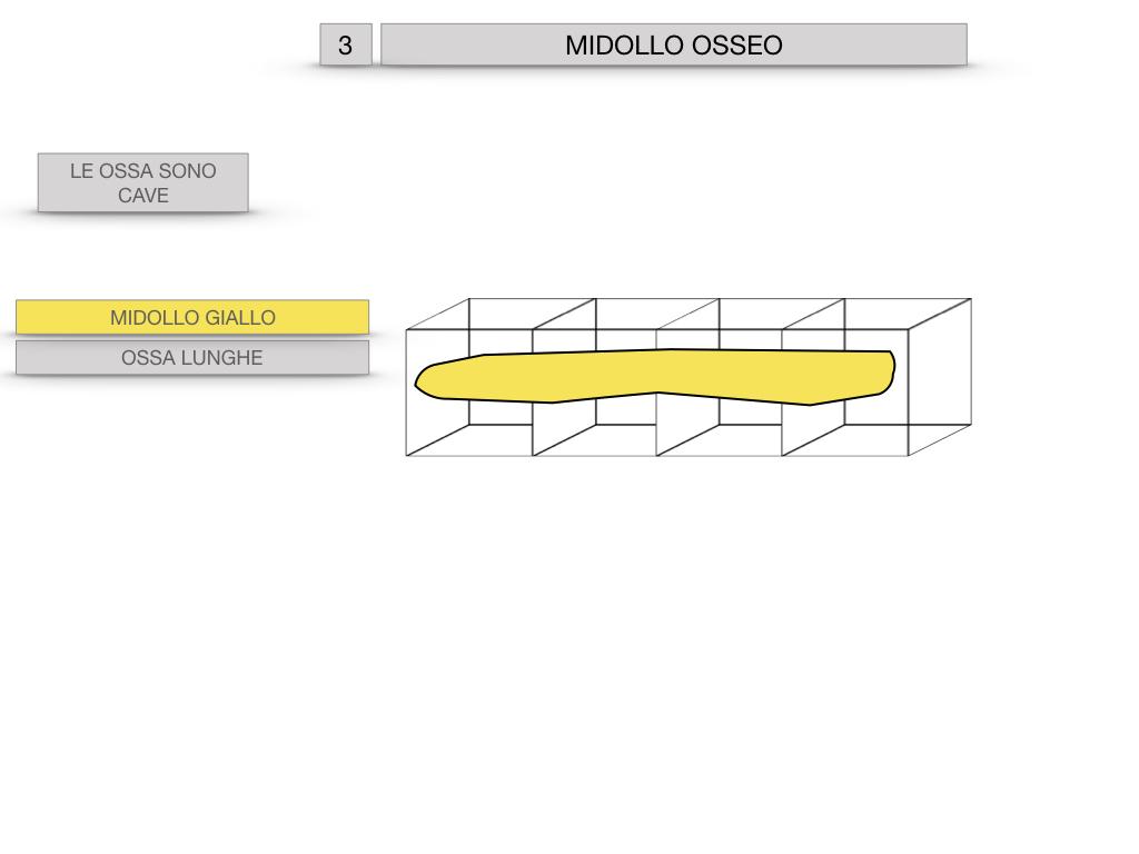 6. TESSUTO OSSEO_ CALCIFICAZIONE_MIDOLLO OSSEO_SIMULAZIONE.068