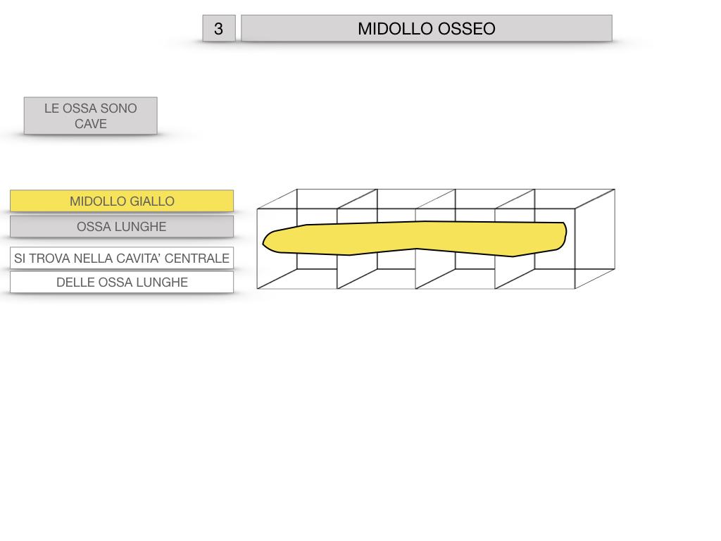 6. TESSUTO OSSEO_ CALCIFICAZIONE_MIDOLLO OSSEO_SIMULAZIONE.069