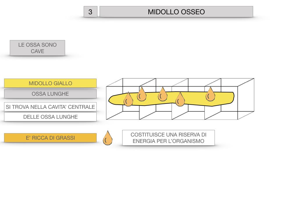 6. TESSUTO OSSEO_ CALCIFICAZIONE_MIDOLLO OSSEO_SIMULAZIONE.071