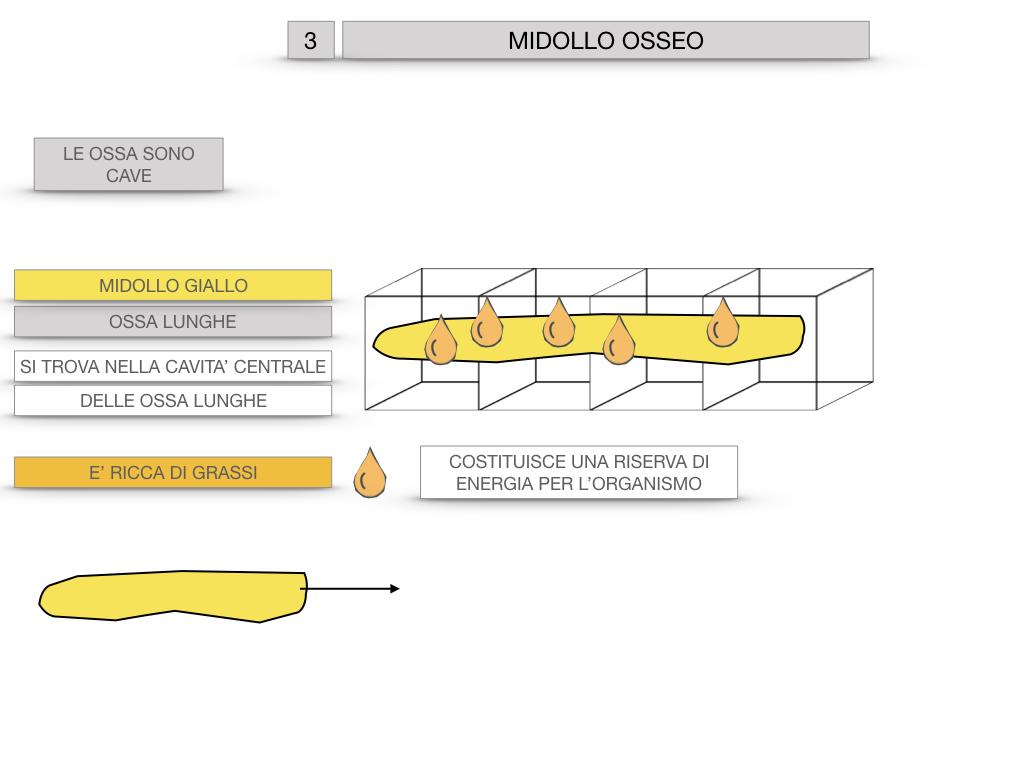 6. TESSUTO OSSEO_ CALCIFICAZIONE_MIDOLLO OSSEO_SIMULAZIONE.072