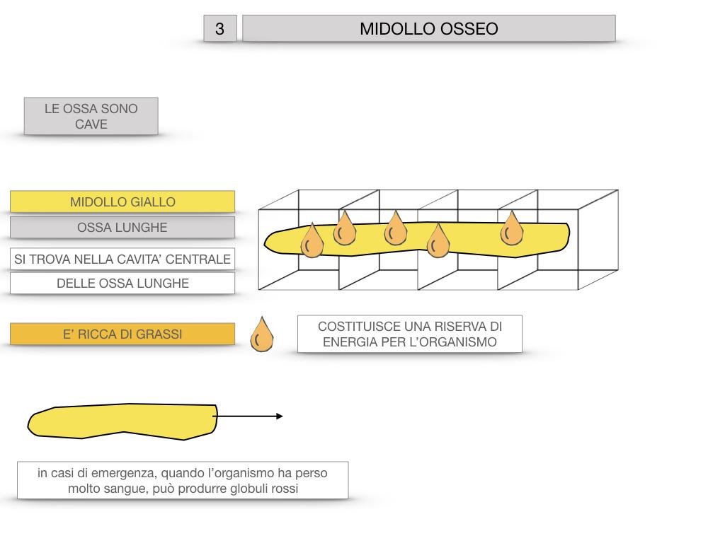 6. TESSUTO OSSEO_ CALCIFICAZIONE_MIDOLLO OSSEO_SIMULAZIONE.073