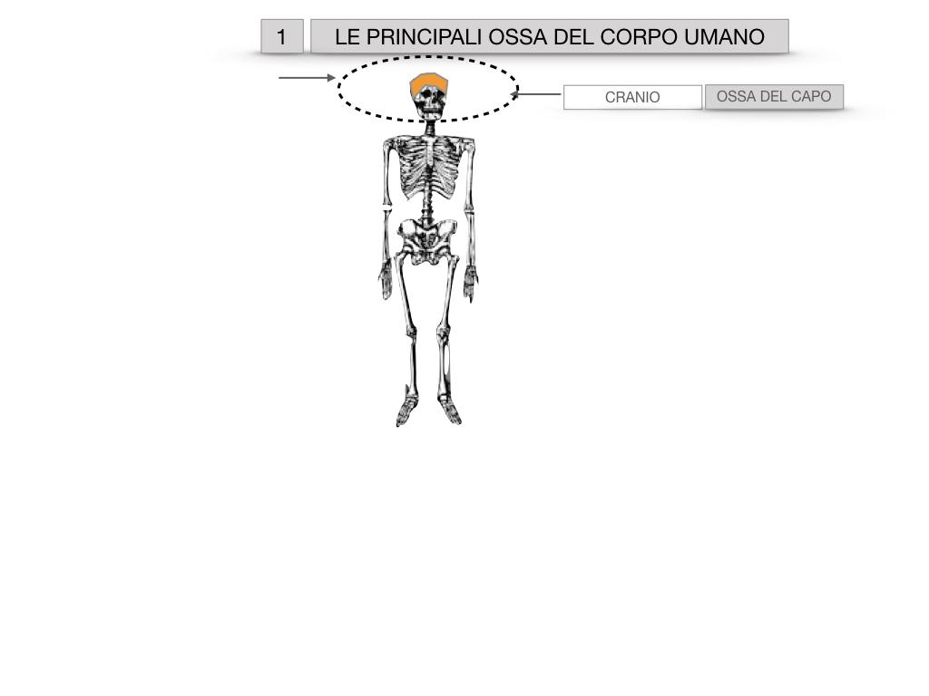 7. LE PRINCIPALI OSSA DEL CORO UMANO_SIMULAZIONE.002