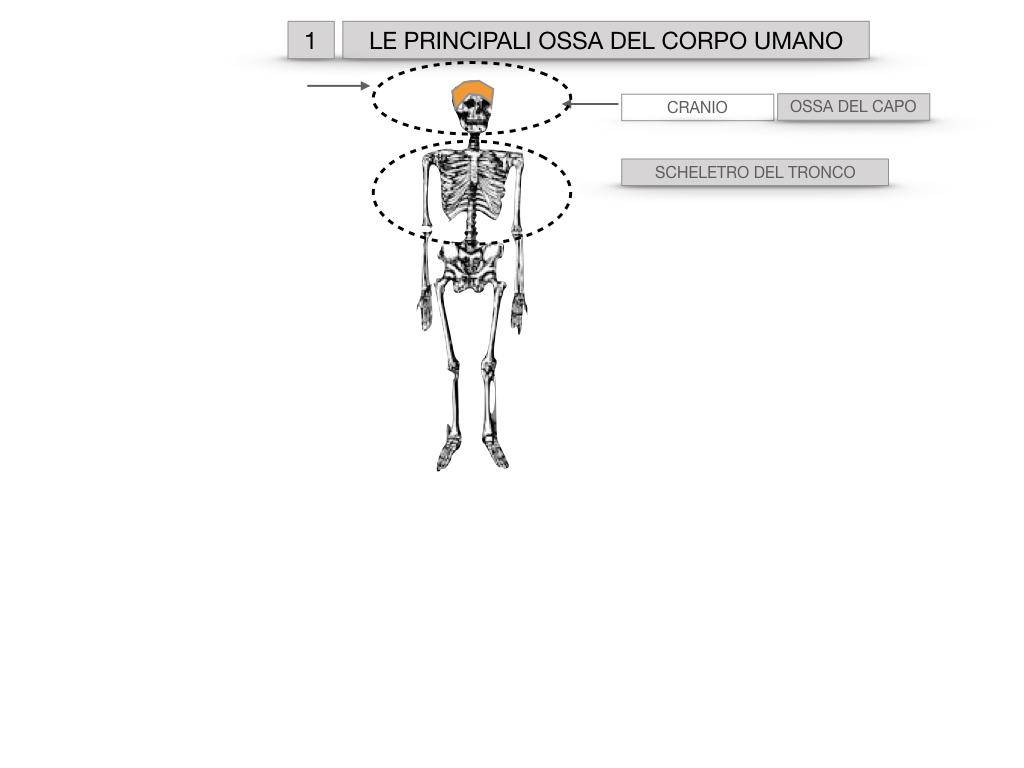 7. LE PRINCIPALI OSSA DEL CORO UMANO_SIMULAZIONE.003