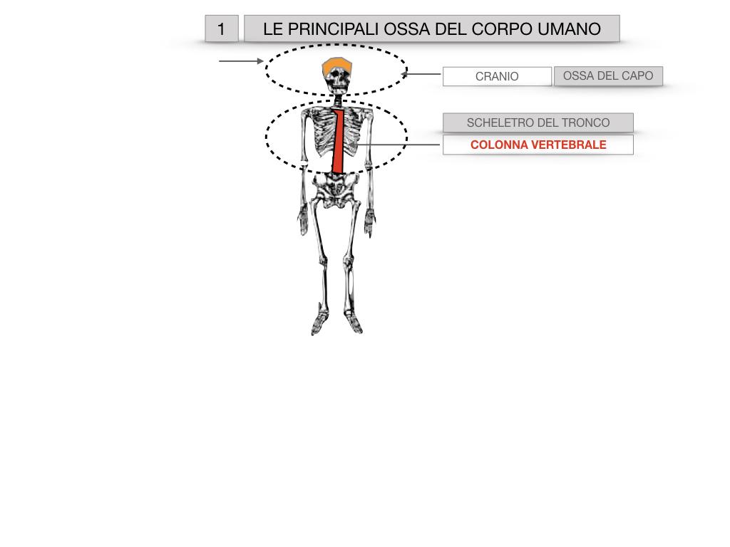 7. LE PRINCIPALI OSSA DEL CORO UMANO_SIMULAZIONE.004