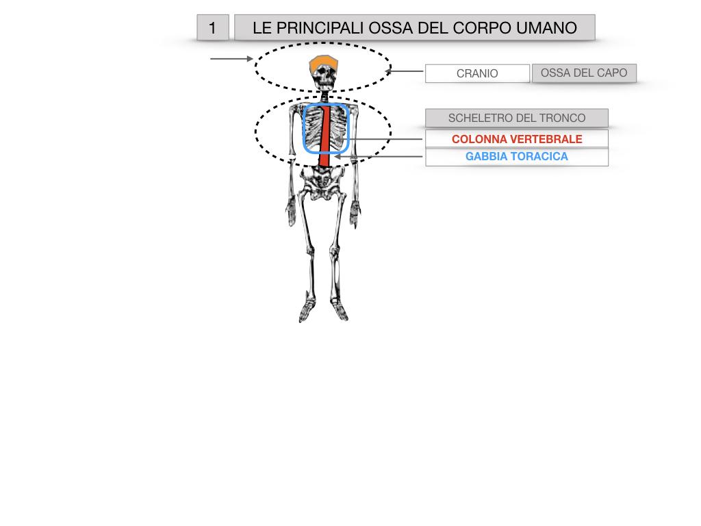 7. LE PRINCIPALI OSSA DEL CORO UMANO_SIMULAZIONE.005