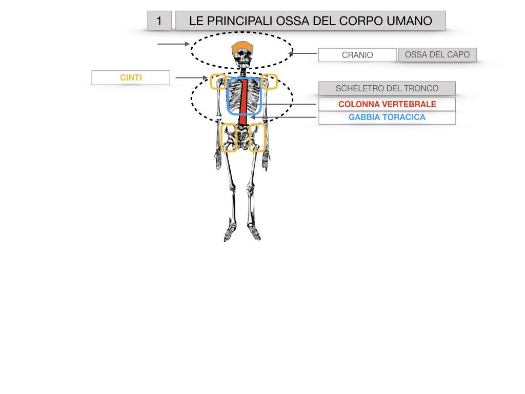 7. LE PRINCIPALI OSSA DEL CORO UMANO_SIMULAZIONE.006